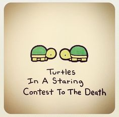 Turtles in a staring contest to the death