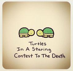 Turtle in a staring contest to the death Cute Turtle Drawings, Cute Animal Drawings, Kawaii Drawings, Cute Drawings, Turtle Sketch, Tiny Turtle, Turtle Love, Cute Turtles, Baby Turtles