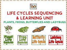 Life Cycles Learning For Butterflies, Plants, Frogs & Ladybugs
