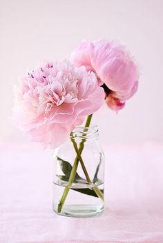 Peony love.. Beautiful, Simple