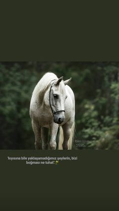 Closer Quotes Movie, King Horse, Cool Words, Islam, Horses, Animals, Sentences, Infinity, Beautiful