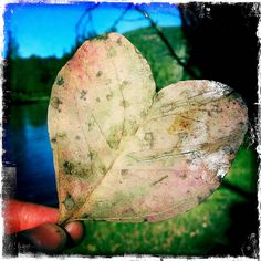 Found Heart by NinianLif, via Flickr