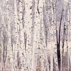 Ideas for silver birch tree tattoo Birch Tree Tattoos, Pine Tree Tattoo, Forest Mural, Tree Forest, Birch Forest, Birch Tree Art, White Birch Trees, Silver Birch Wallpaper, Tree Design On Wall