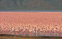 Blog Ativa   Bogoria Lake