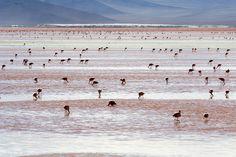 laguna colorada bolivia - Cerca con Google