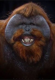Do Animals Smile? Awesome Images of Smiling Animals pics) Ugly Animals, Smiling Animals, Cute Funny Animals, Funny Animal Pictures, Animals And Pets, Ugliest Animals, Especie Animal, Animal Faces, Primates