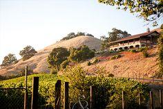 Paradise Ridge Winery, Sonoma Wedding Location - BayAreaWeddingVenues.com