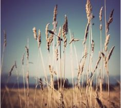 """Beach Grass"" For prints…"