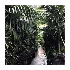 """in the jungle"" Photo taken by @johndunfee on Instagram, pinned via the InstaPin iOS App! http://www.instapinapp.com (06/25/2015)"