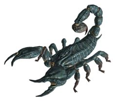 The scorpion is part of the arachnid family and it is carefully associated with spiders, mites and ticks. Arachnids have four set of legs and 2 body segments: a cephalothorax and abdomen. Scorpio Art, Zodiac Signs Scorpio, Scorpion Image, Small Rat, Desert Environment, Bee Swarm, Fire Ants, Mongrel, Komodo Dragon