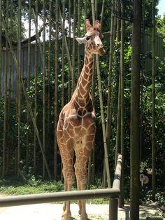 Audubon Zoo in New Orleans, LA