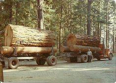 Big Log Load on a Short Logger. Big Rig Trucks, Old Trucks, Semi Trucks, Heavy Construction Equipment, Heavy Equipment, Timber Logs, Logging Equipment, Road Train, Northern California