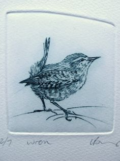 Drypoint etching Wren. Tiny bird limited by LynnBaileyPrintmaker