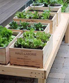 Para ter uma horta em casa é só ler este post até o fim, ok ? A nossa editora de Jardinagem e Paisagismo, Marcia Nassrallah explica tudinho!