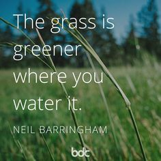 """Quote of the day: """"The grass is greener where you water it."""" - Neil Barringham"""