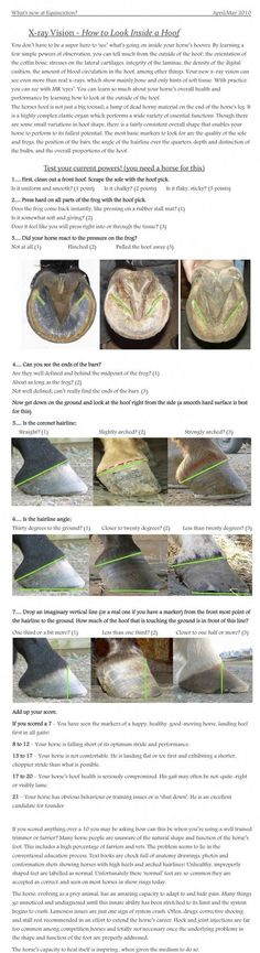 horseriding horserider equine Hooves horseriding h Pretty Horses, Horse Love, Beautiful Horses, Horses And Dogs, Show Horses, Horse Care Tips, Horse Anatomy, Horse Facts, Horse Grooming
