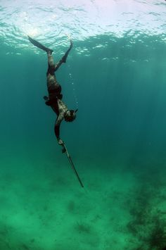 Spearfishing (aka Underwater Hunting): an Introduction to Seaside Survival