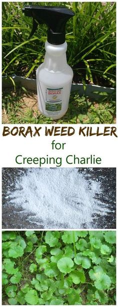 Weed Killer for Creeping Charlie This Borax weed killer does a good job of controlling creeping Charlie in your lawns.This Borax weed killer does a good job of controlling creeping Charlie in your lawns.