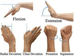 wrist flexion extension