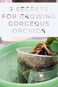 These tips to orchid care for beginners are great! Find out all the basics for growing indoor orchids in pots. These tips to orchid care for beginners are great! Find out all the basics for growing indoor orchids in pots. Orchids In Water, Indoor Orchids, Orchids Garden, Orchid Propagation, Orchid Fertilizer, Orchid Roots, Orchid Leaves, Orchid Plant Care, Orchid Plants