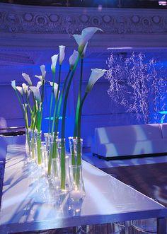 white flower centerpieces for weddings | Flowers, Reception, White, Blue, Lighting, Got light