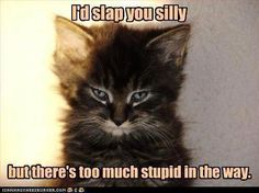 This cat has my attitude!  Remember, you can't fix stupid (courtesy of Ron White).  LOL!