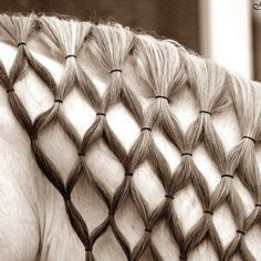 Horses with long manes need special care and special braids for shows. Description from uk.pinterest.com. I searched for this on bing.com/images