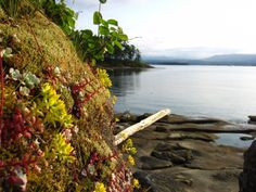 AA Gabriola Island Photo Contest Winners | Events | Community | Gabriola Georgia Strait Cam