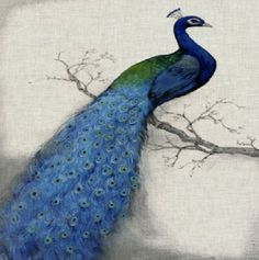 """Custom & Cool {3.5"""" Inches} in Bulk Pack Set of 12 Square """"Grip Texture"""" Drink Cup Coasters Made of Flexible Poly Fabric w/ Rubber Bottom & Peacock Bird Painting Design [Colorful Tan, Blue & Green]"""