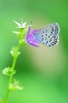 ~~butterfly bokeh by poesie~~