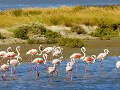 Parc naturel de la Camargue Guide du tourisme dans le Gard Languedoc-Roussillon