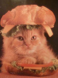 Cat Snack