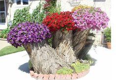 """Gjør om trestubben i hagen til en """"krukke"""" for blomster og planter."""