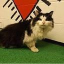 Urgent Cats of Floyd: URGENT! We need help! Tons of CATS and KITTENS have been flooding in **HEARTSTICK FACILITY** Please share for adopt, rescue, foster, pledges!!