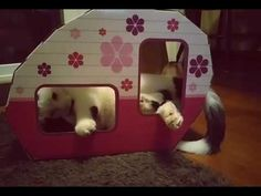 This happy little camper got nearly 14,000 views on Instagram! What a cutie he is. Loving his new Kitty Camper! Available on Amazon - just type in Kitty Camper!