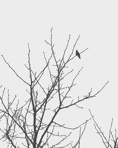 Slow Winter  Black and White Photo Gray by 9thCycleStudios on Etsy