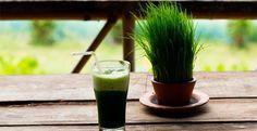 Suco verde de grãos germinados e outras receitas com brotos