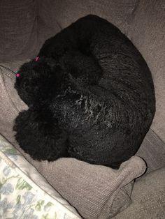 Post grooming nap. SOPHIE
