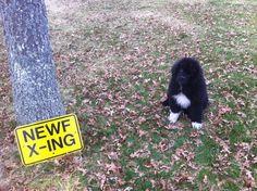 Merlin @ 4 months