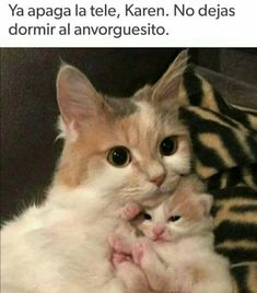 Funny Spanish Memes, Stupid Funny Memes, Karen Memes, Baby Animals, Cute Animals, Twd Memes, Funny Cute Cats, Mundo Animal, Animal Memes