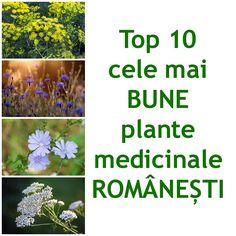 Cele mai bune plante medicinale romanesti