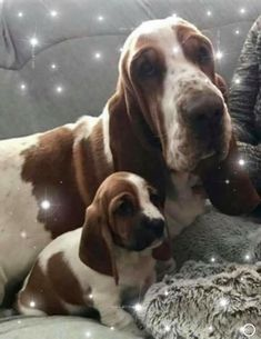 Someone Shares Pic Of Their Cat Hiding From The Vet, The Internet Responds With Their Own Hilarious Pics - Saturday, October 05 Hound Puppies, Basset Hound Puppy, Hound Dog, Cute Puppies, Dogs And Puppies, Animals And Pets, Baby Animals, Cute Animals, Pet Dogs