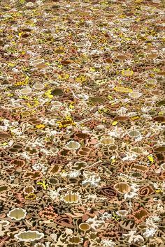Nathan Craven's ceramic carpet