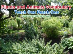 Building Vocabulary –Plants and Animals – Teach One Reach One