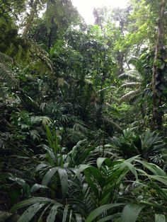 Forests that grow back after being cleared for agriculture or by logging grow back much faster than old-growth forests, soaking up carbon and providing vital habitat.