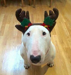 Have a Bully Christmas!