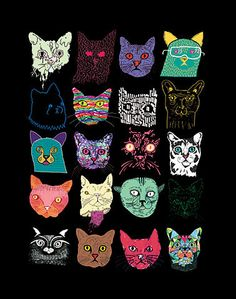 Cats, cats and more cats...