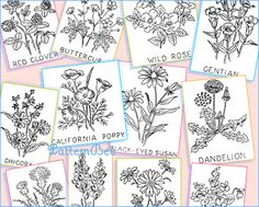 1000 Images About Embroidery Stitches On Pinterest
