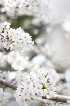 pretty delicate white flowers