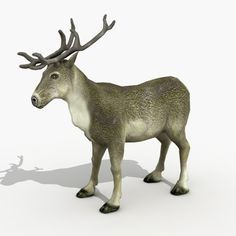 images of reindeer - Google Search